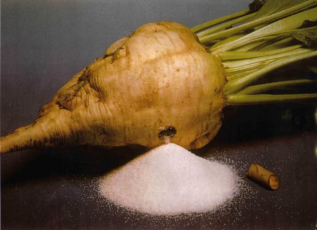 Sugar-Beet